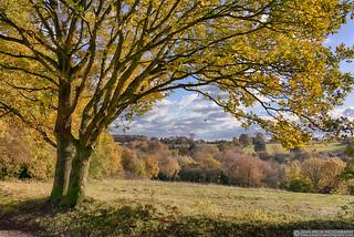 Autumn on Chorleywood Common
