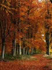 End of autumn (juliendumont2) Tags: forest forestscape forestpath wood woods woodscape trees tree orange leaf mothernature naturephotography nature belgium canon inexplore