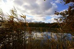 Herbstmotive (Lutz Blohm) Tags: herbststimmung herbst herbstimpressionen herbstsonne herbstidylle zeissbatis18mmf28 sonyalpha7aii