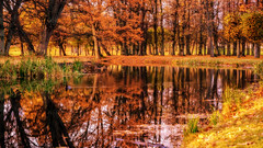 Reflections of Fall (Jens Haggren) Tags: fall autumn trees reflections colours water bird