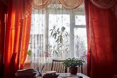 window with orange curtains, and flowers in pots (uiriidolgalev) Tags: windowwithorangecurtains andflowersinpots