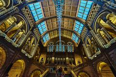 History Museum London (dionysus_grape) Tags: sonya7ii voigtlanderheliar15mmf45iii captureone superwide