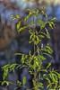 pianta sul fiume (gianmaria.colognese) Tags: verde controluce pianta foglie contrasto