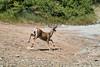 Deer (deepskywim) Tags: reeën zoogdieren dieren threerivers california unitedstates us