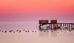 Silence (Edita Ruzgas. Thanks for your visit.) Tags: edita ruzgas birds tranquility calmness serenity horizon pink red evening scandinavia nordic country skane skåne southern south sweden