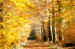 Zauberwald (sabine1955) Tags: herbst autumn forrest blätter gelb grün bunt natur