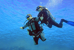 quadruple amputee man takes diving course 09 (KnyazevDA) Tags: disability disabled diver diving deptherapy undersea padi underwater owd redsea buddy handicapped aowd egypt sea wheelchair travel amputee paraplegia paraplegic