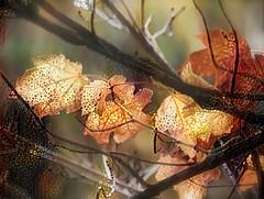 Transition (done by deb) Tags: digitalart leaves fall fallfoliage fallcolors autumn deepdreamgenerator
