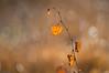never stop dancing (Emma Varley) Tags: leaf autumn golden light bokeh movement dancing