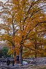 1339_0581FLOP (davidben33) Tags: newyork central park street streetphotos people nature trees bushes leaves colors green yellow sky cloud lake portraits women girl cityscape landscape autumn fall 2017 beaut manhattan blue beauty oilpaintfilter