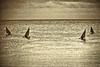 Ngalawa Mono (jay_kilifi) Tags: sky morning dawn seaocean indianoceankenya kilifi creek sepia monochrome bw blackandwhite vintagel egacy canoe dugouttraditional coast swahili fishing kiswahili giriama kigiriama fish