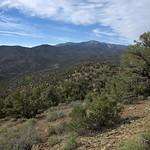 Classic pinyon-juniper woodland vegetation, White Mountains, Inyo County, California thumbnail