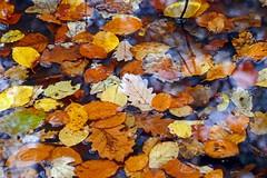 Buntes Herbstlaub (anubishubi) Tags: blätter leaves laub herbstlaub foliage autumn wald forest bäume trees lumixtz101