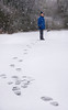 Footprints (Jacqueline138Kelly) Tags: luke jacquelinekelly nikon 18250macro snow wintery winter wintersday white cold