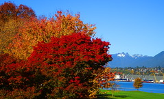 An Autumn moment with a touch of fresh snow (peggyhr) Tags: peggyhr autumn trees ocean mountains vancouver bc canada dsc09381a infinitexposurel1