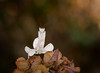 Clouds in My Coffee (Kathy Macpherson Baca) Tags: animal animals insect insects invertabrates extoskeleton predator prey pray world nature wildlife bug bugs planet earth orchid small macro bokeh preserve