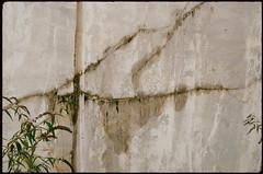 Treffen (Harald Reichmann) Tags: kärnten treffen krastal steinbruch marmor bearbeitung abbau linie riss bohrung pflanze analog film nikonfm2