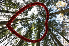 Look up (Pinky0173) Tags: herz bäume heart trees lookup wald forest canon pinky0173 thrunfotografiede eeckhold thelooklevel1 infinitixposurelevel1