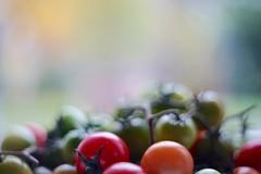 Last garden harvest (fxdx) Tags: last garden harvest pentacon 50mm f18 manual m42 prime tomato bokeh a7 ilce7