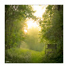 Nebel im Moor - fog in the moor (mmsig) Tags: landschaft wald moor niedersachsen wedemark 2017 juni canoneos mmsig landscape wood trees baum nebel dunst sun sunbeam sonnenstrafl fog haze green grün