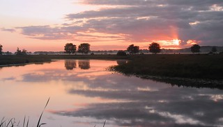 Morgens an der Alten Treeneschleife; Süderhöft, Nordfriesland (77)