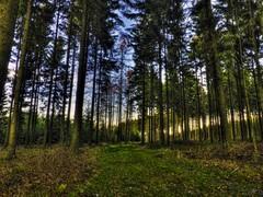 Rond-chêne vers Mont-le-soie end HDR (RenaudWarnotte) Tags: rondchêne hdr