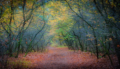 The clearest way into the universe is through a forest wilderness (Ingeborg Ruyken) Tags: dropbox autumn november rosmalen bomen trees forest bos 500pxs fall natuurfotografie 2017 rosmalensezandverstuiving flickr herfst