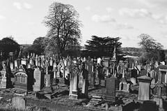 Graveyard (DuncanGreenhill) Tags: pentax phonar film graveyard gravestone ilfordxp2 c41process mesuper phonarnation nationlooking4light 50mmf14