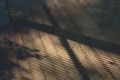 Lodi Gardens, New Delhi (NovemberAlex) Tags: shadows india delhi