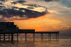 Starlings at Aberystwyth pier (babs pix) Tags: starlingsaberystwythpier starlings sunset sunsetsea ceredigion westwales cardiganbay aberystwyth aberystwythpier sea