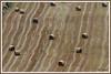 Champs paille 170731-02-P (paul.vetter) Tags: paille champs foins ballots