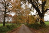 Two Weeks Later (JP Photography74) Tags: trees autumn countrylane rural nature outdoors uk england staffs butterton canon sigma green bronze brown leaves lane