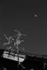 Noche de brujas (luenreta) Tags: bruja veleta gato noche luna bw monocromático 7dwf