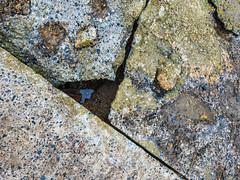 Old concrete (@bill_11) Tags: oldhoverport unitedkingdom isleofthanet england kent pegwellbay cliffsend gb