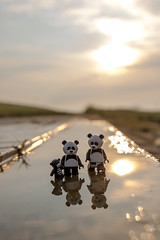 Pandas in a puddle (Ballou34) Tags: 2017 7dmark2 7dmarkii 7d2 7dii afol ballou34 canon canon7dmarkii canon7dii eos eos7dmarkii eos7d2 eos7dii flickr lego legographer legography minifigures photography stuckinplastic toy toyphotography toys rømø danemarkdusud danemark dk stuck in plastic panda pandas puddle sunrise water reflection