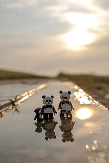 Pandas in a puddle