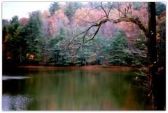 Dream Pond (GR167) Tags: scan ektar film analog c41 24x36 emulsion canonfilm nc northcarolina fall autumn november lake pond walden calm serene