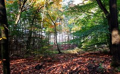 LFV2017101402 (Leo Visser) Tags: october oktober autumn fall forest bos veluwe holland sunset leaves leaf tree trees walt woud