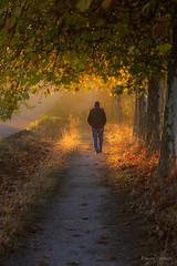 Se hace camino.... (AvideCai) Tags: avidecai vertical paisaje luz color amanecer otoño