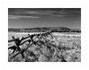 Buck and Rail Fence (Joe Franklin Photography) Tags: buckandrail fence wyoming grandtetonsnationalpark grandtetons jacksonwyoming jackson wy nationalparks blackandwhite film nikonfm2 joefranklin wwwjoefranklinphotographycom almostanything
