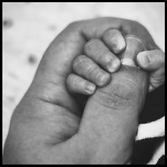father and son fingertip HMM (sven.hallmann) Tags: fingertips macromonday makro fingers hand