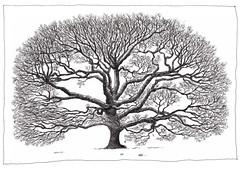 Switzerland, Geneva, winter tree (pirlouit72) Tags: suisse switzerland geneva geneve sketch drawing dessin croquis urbansketch urbansketcher urbansketchers carnetdevoyage tree arbre