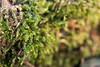 Muschio (Sinisa78) Tags: muschio sottobosco macro