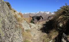 Nasco (bulbocode909) Tags: chiens nature montagnes automne paysages rochers valais suisse bleu