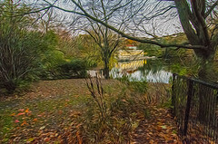 1338__0637FLOP (davidben33) Tags: brooklyn 718 ny quotnew yorkquot quotprospect parkquot autumn 2017 fall trees bushes leaves lake pets gooses ducks water sky clouds colors yellow green blue people quotstreet photosquot