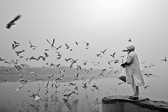Beauty of Yamuna Ghat (Rk Rao) Tags: bw blackandwhitephoto monochrome art artistic fineart fineartphotography morningbeauty morningglory yamunaghat kashimirigate delhi oldman migratorybirds radhakrishnarao reflections rkrao india