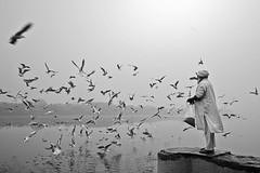 Beauty of Yamuna Ghat (Rk Rao) Tags: bw blackandwhitephoto monochrome art artistic fineart fineartphotography morningbeauty morningglory yamunaghat kashimirigate delhi oldman migratorybirds radhakrishnarao reflections rkrao india