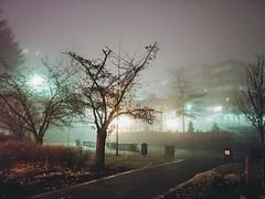 Lightened foggy. (thnewblack) Tags: lg v30 android smartphone cameraphone outdoors cityhall dark lowlight night moody foggy rainy britishcolumbia 16mp f16