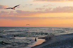 Sunset in paradise (msimpson5) Tags: canon nature seascape landscape florida waves water sky sunset ocean beach