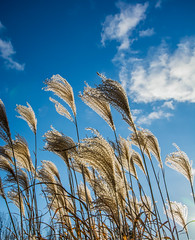 fronds-2_MaxHDR (old_hippy1948) Tags: